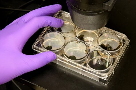 Stem cell research taking strides