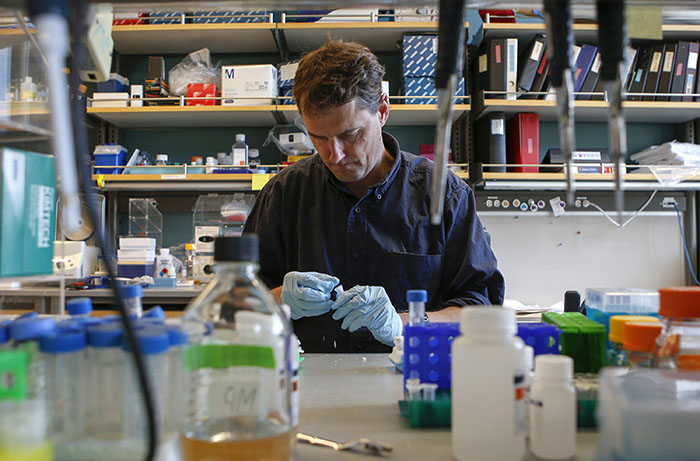Matthew Porteus, 51, professor of pediatrics at Stanford School of Medicine, pipettes DNA to use for gene editing of stem cells at Lokey Stem Cell lab at Stanford University in Stanford Calif., on Dec. 18, 2015. (John Green/Bay Area News Group/TNS)