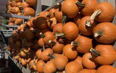 Small pumpkins at Massey's Produce